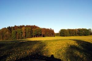 Wiesen östlich um Eschenbach
