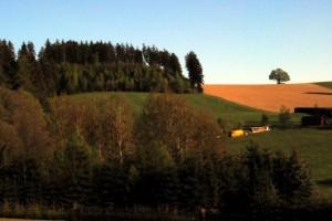 Östlicher Waldrand nach Eschenbach