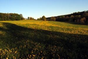 Wiesen westlich um Eschenbach